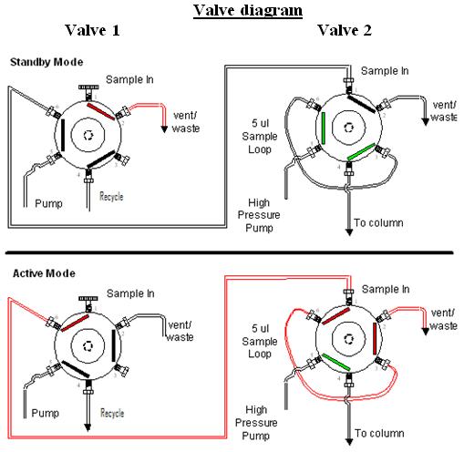 roney tattoo  heart diagram valves